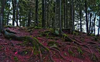 Шварцвальдский лес в Германии: путешествие в сказку