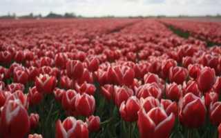 Работа и вакансии в Голландии
