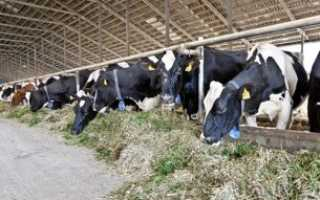 Работа в Германии на ферме как вариант официального трудоустройства за границей